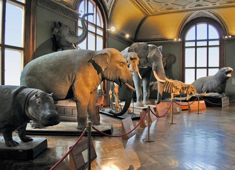 Музей истории искусств Вена